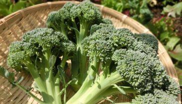 食べ物から抜け毛対策!食事に野菜を取り入れて育毛・増毛!